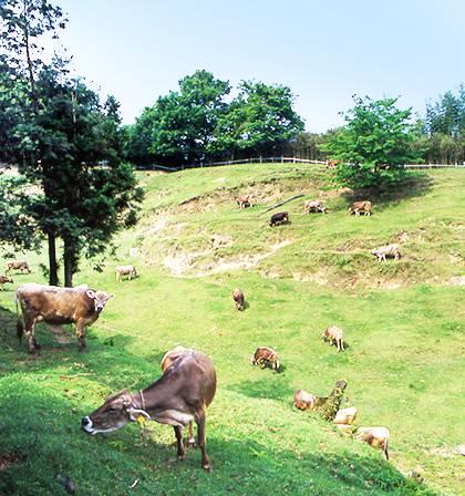 京口乳業株式会社 牛飼いの想いが実を結んだ日本初のパスチャライズ牛乳